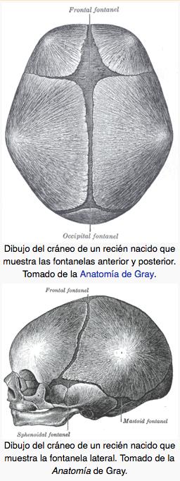 Suturas y fontanelas del cráneo de un bebé