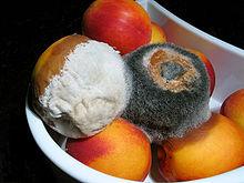 moho en la fruta